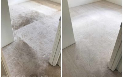 What to do Before Your Carpet Cleaning